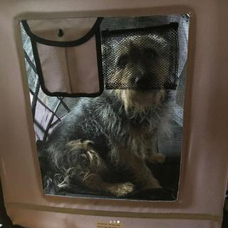 Milo (Cairn Terrier / Yorkie Mix) ~ 35 lbs