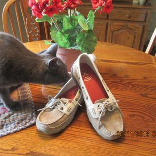 "Cat BLu sez, "" m'mm, new suede leather smells soooo good !"