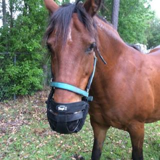 This is my Mustang Shakee in her new Grazing muzzle.