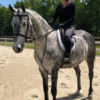 Love this simple black bridle. It looks stunning on my grey saddlebred.