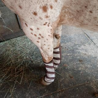 Love our Kensington Natural Fly Boots!