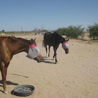 Arizona horses.