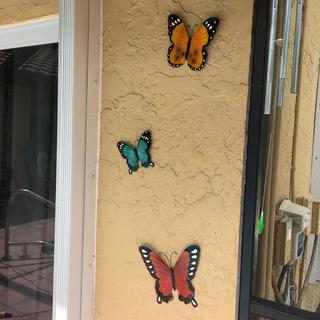 Had to have these as I live in Coconut Creek, FL We are known as the Butterfly Capital of the World