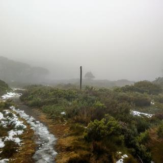 The conditions at 1500 meters on the Baw Baw plateau.