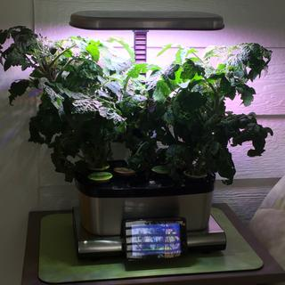 AeroGarden Harvest Touch with Gourmet Herbs Seed Pod Kit Sur La
