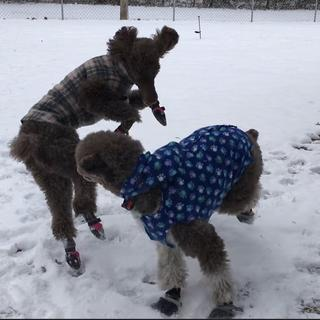 We had snow and fun