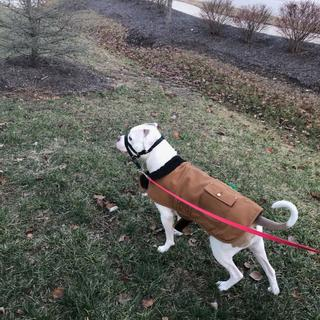 Zeus loves his coat.  And so do we!  It keeps him warm on those cold days, it is easy to care for.