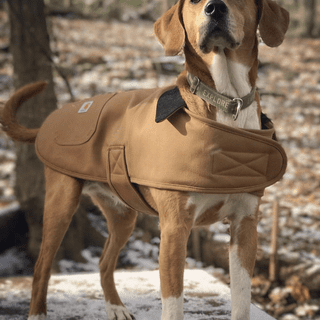 Brandy the foxhound mix loves her carhartt jacket!