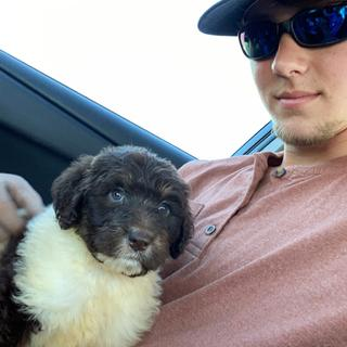 """Wore it as casual wear to pick up my new labradoodle """"Stewie"""""""