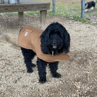 Walter loves his work jacket!