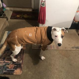 Meatloaf loves his new coat! Makes garage and yard time in the winter,much more enjoyable!