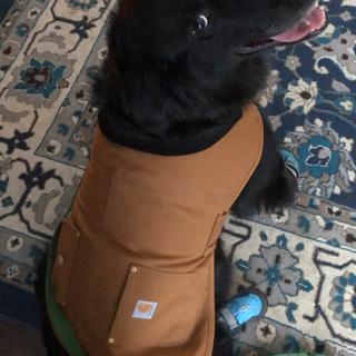 Shadow absolutely LOVES his carhartt jacket. Would recommend to everyone!