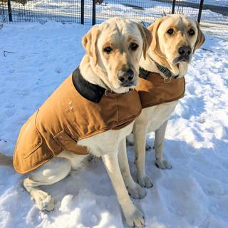 Doc and Festus in their new Carhartt jackets