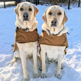 Doc and Festus ready for winter in their new Carhartt jackets