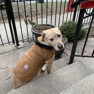 Hudson rocking his new jacket!