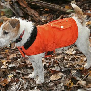 The size small chore coat on a 15-pound JRT being put through its paces.