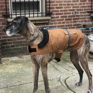We were so thrilled this coat fit our boy! I ordered the largest size possible. Would recommend.