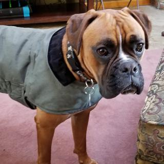 Jake looks extra handsome in his new Chorecoat.