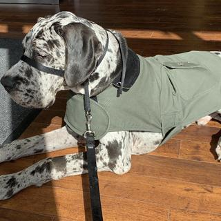 Perfect for my growing Great Dane puppy. Bought the XL and it will be able to fit him forever.
