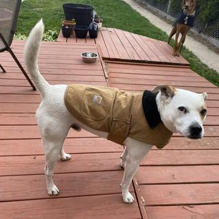 Cody's coat is still going strong after 4 Chicago winters.
