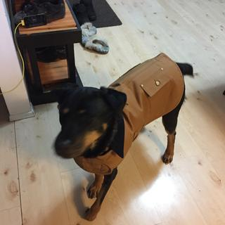 What a great durable jacket!  She gets so many compliments.