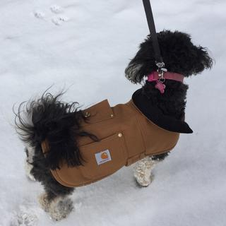 I am a Carhartt man, so I could not have my little dog in anything buy a Carhartt.