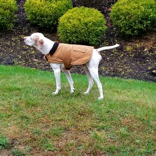 Rusty sporting his new Carhartt  jacket.