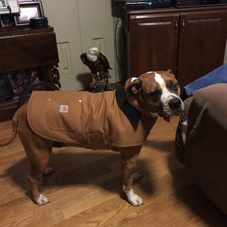 Harley-D our granddog