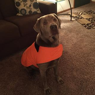 Toby loves the color of his new coat. It's great for hunting season and chilly ice fishing days.