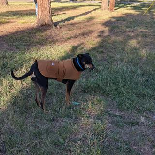 Dobilei loves her New Carhartt winter coat.