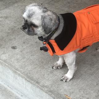 Tobie loves his chore coat ??