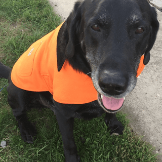 Raven loves his new Carhartt coat!