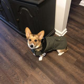 Excellent fit for those doggos that have long bodies and short legs!