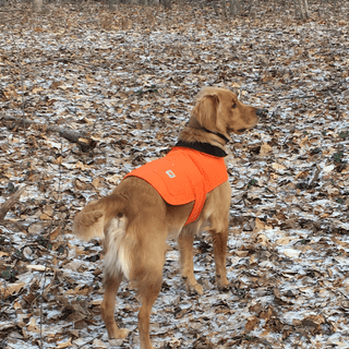 Gus loves his chore coat thanks for making a great product  for our four legged friends!!