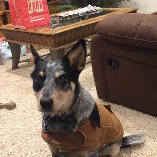 Brandy loves her carhartt jacket