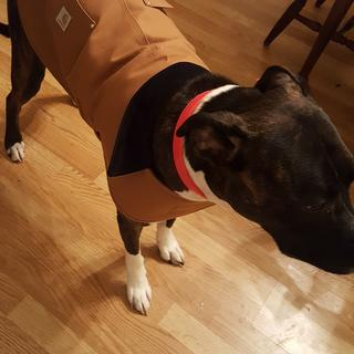 We ordered a Large for our ~70lb boxer/lab mix. It fits her very well - would definitely recommend.
