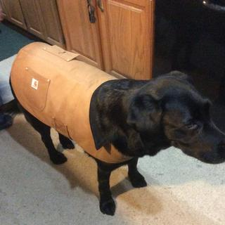 Hi Decoy my name I love my new coat it keeps me warm