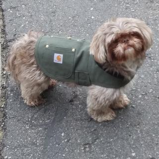 This is the size small on a 14 lbs Shih Tzu. Fits him perfectly! ?
