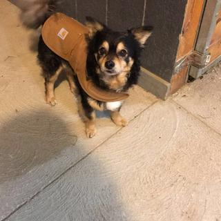 He loves wearing his new coat in the barn. Keeps him nice and warm! Plus he looks too cute in one