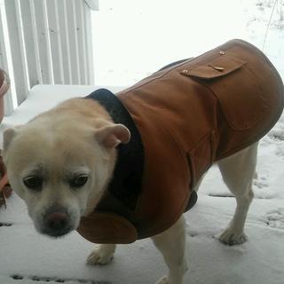 Gidget loves her new coat!