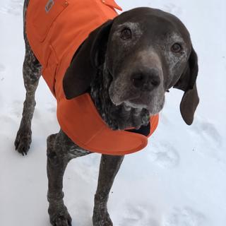 Mickey loves it! The coat keeps him warmer.