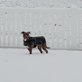 Stands up to the snow well, no soaking through like other brands.