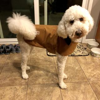 Woody is a goldendoodle.  He weights 50 pounds, very slim. We bought the large and it fits great.