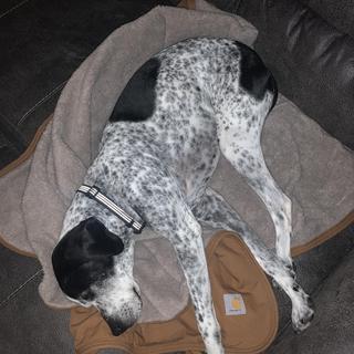 Otis loves his new blanket!