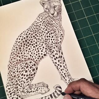 Cheetah drawing using the Tombow Mono drawing set.