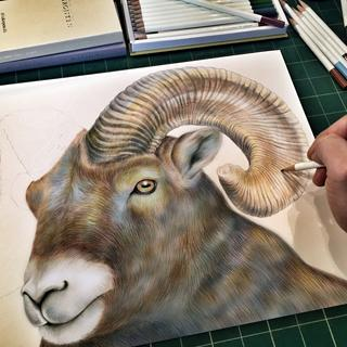 Ram drawing done with Irojiten Colored Pencils