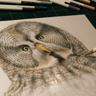 Great Gray Owl drawing done with Irojiten Colored Pencils