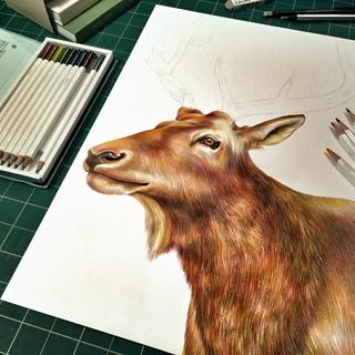 Elk drawing done with Irojiten Colored Pencils